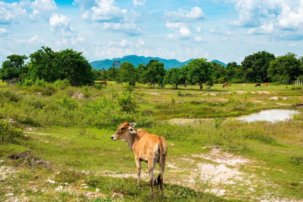 Koe Wildlife Friends Foundation Thailand