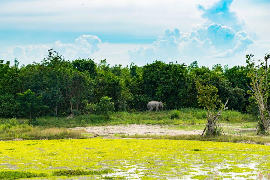 Olifant Thailand