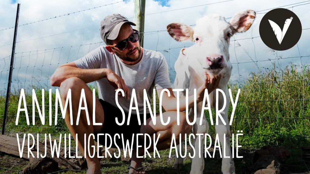 Video Een dag op een vegan animal sanctuary (vrijwilligerswerk in Australië)