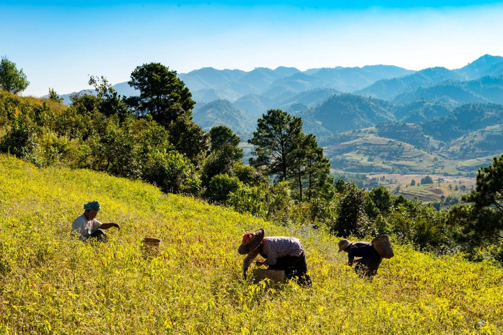 locallife-myanmar-reizen