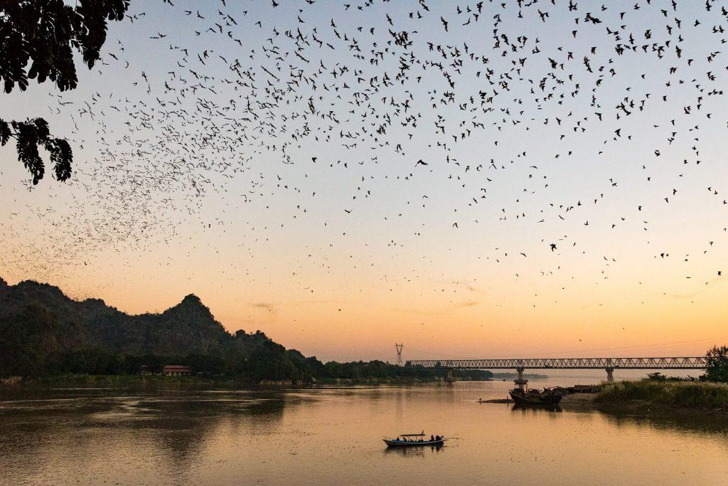 vleermuizen-myanmar