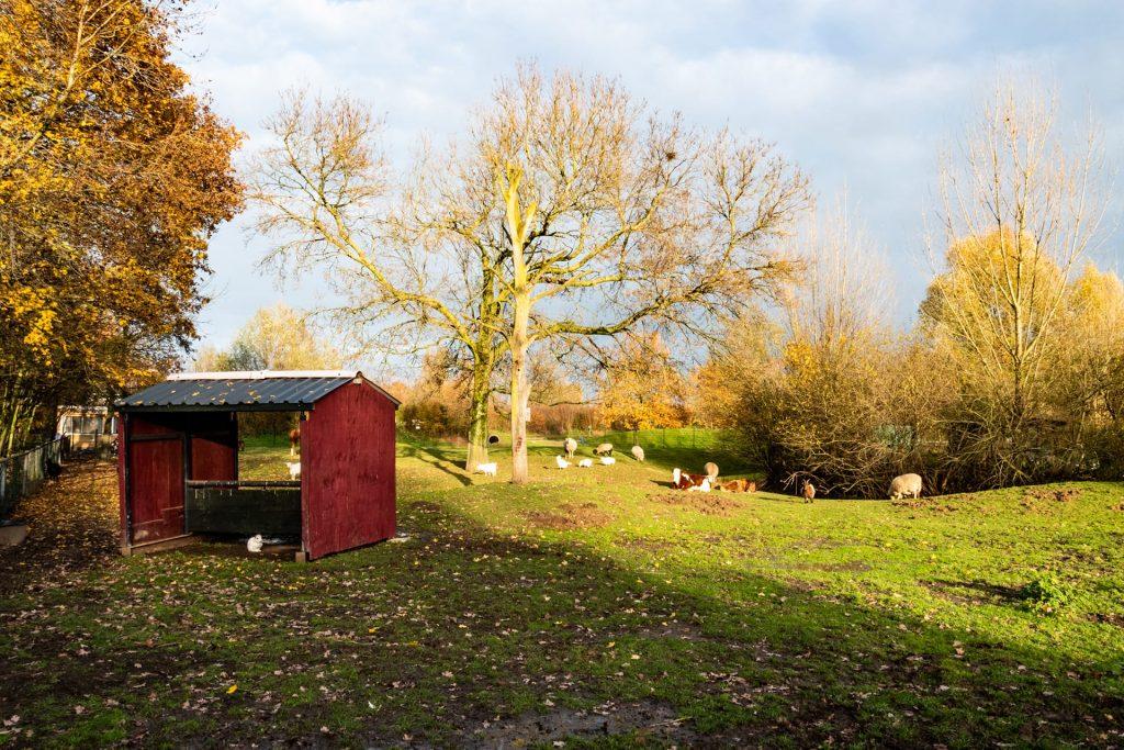 Animal Sanctuary Oosterhoeve Den Bosch